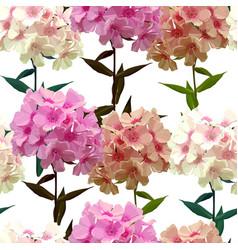 Seamless background pink phlox vector