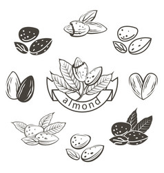 Almond images set vector