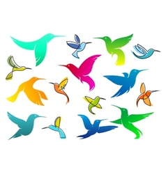 Colorful hummingbird birds vector image