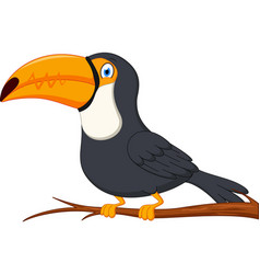 cute toucan bird cartoon vector image