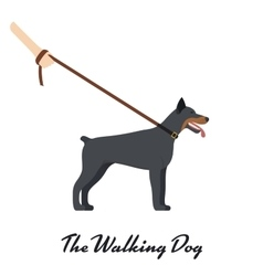 Doberman Pinscher with a leash - on white vector