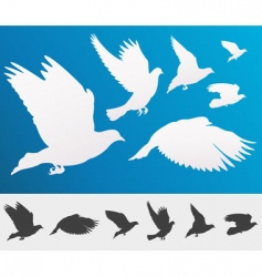 flying birds silhouette vector image
