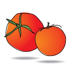 freehand drawing tomato icon vector image