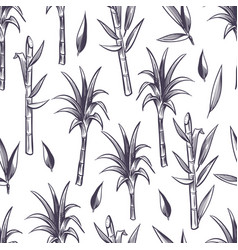 sugar cane stalks with leaves sugarcane plant vector image