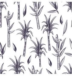 Sugar cane stalks with leaves sugarcane plant vector
