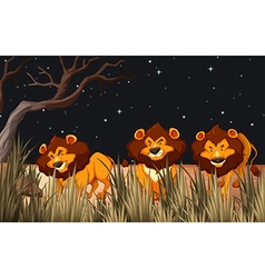 Three lions in the field at night vector image