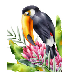 Watercolor tucano bird sitting in tropical flowers vector