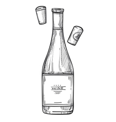 Bottle of wine freehand pencil drawing vector image vector image