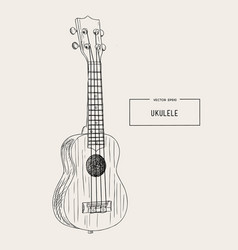 ukulele - hawaiian musical hand drawn sketch vector image