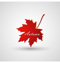 A maple leaf vector