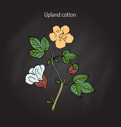 Cotton plant with flower vector