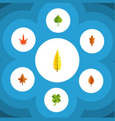 Flat icon maple set alder leafage aspen and vector