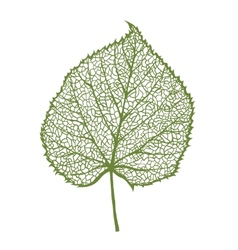 linden leaf isolated on white background vector image