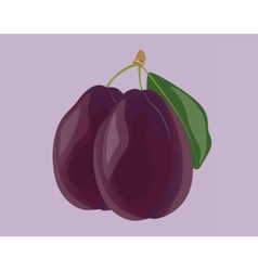Plum fruits isolated vector image vector image