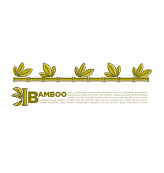 Bamboo poster design of tropical palm leaf vector