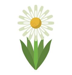 Daisy floral garden spring vector