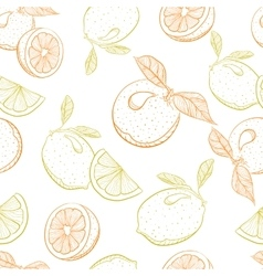Drawing pattern of citrus orange and lemon vector