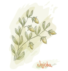 Jojoba branch vector
