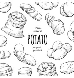 Potato drawing square banner organic fresh food vector