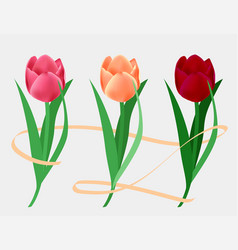 Set colorful tulips flowers for natural design vector
