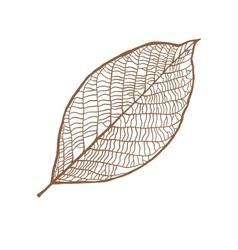nut leaf isolated on white background vector image