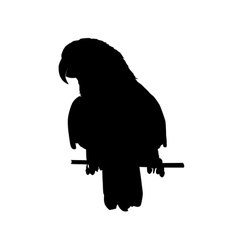 Black parrot silhouette vector