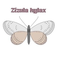 Butterfly zizula hylax vector