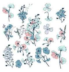 collection geranium flowers for design vector image