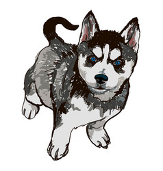Dog breed breed husky vector
