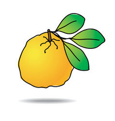 Freehand drawing ugli fruit icon vector