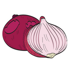 pair of onions vector image