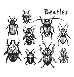 Set of hand drawn ink bugs beetles vector