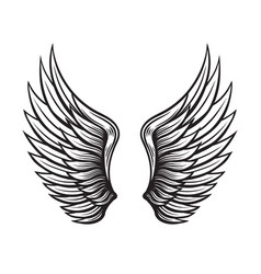 Wings set hand drawn detailed collection vector