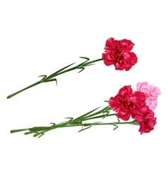 Red clove Bouquet of carnations Set carnation vector image vector image
