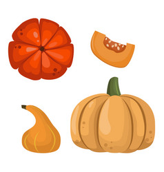 Fresh orange pumpkin vegetable isolated vector