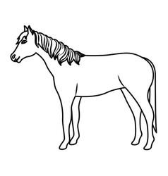 Horse livestock animal design vector