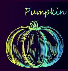 Vegetable pumpkin sketch vector