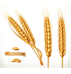ears of wheat 3d icon set vector image vector image