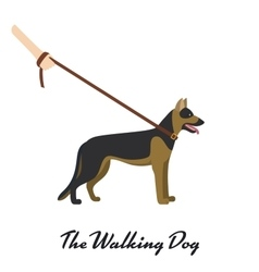 German shepherd with a leash - on white background vector image vector image