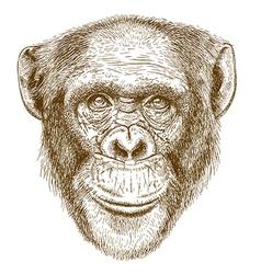 engraving chimp vector image vector image
