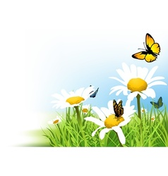 Butterflies and Daisy vector image vector image