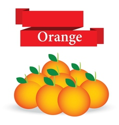 fresh orange on white background vector image