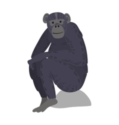 Macaque monkey rare animal vector image
