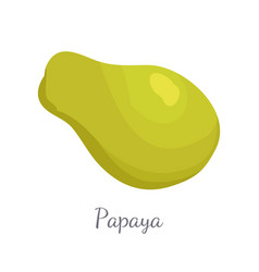 papaya exotic fruit isolated papaw pawpaw vector image