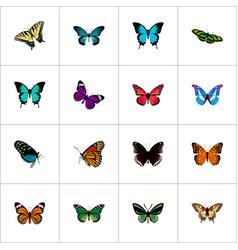 Realistic danaus plexippus birdwing butterfly vector