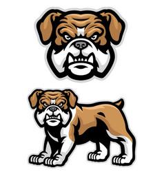 set english bulldog mascot vector image
