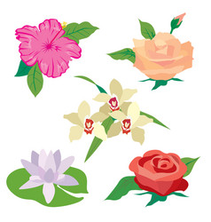 wildflower rose lotus poppy vector image