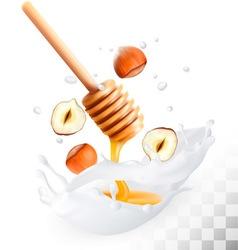 Hazelnut and honey in a milk splash on a vector image vector image