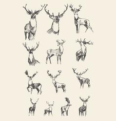 Set drawn noble deers sketch vector