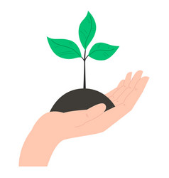 human hand with growing plant in flat style vector image